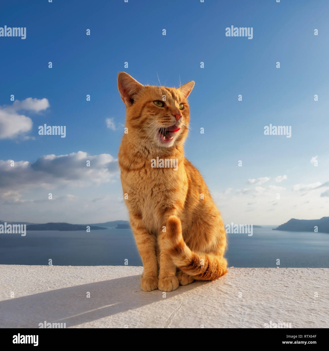 Cute ginger cat siting on balcony - Stock Image