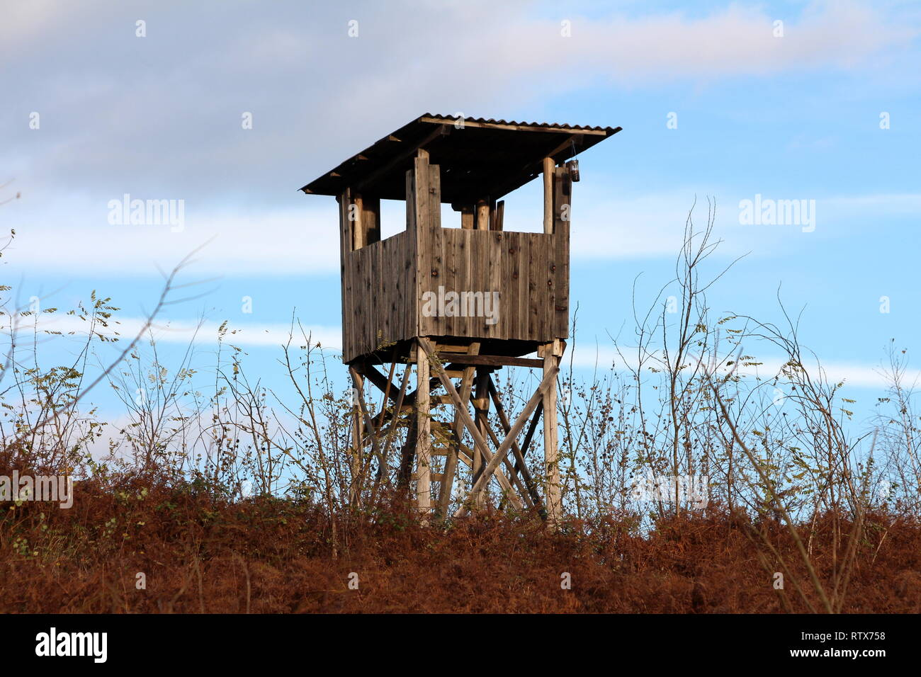 Wooden hunting observation tower with improvised ladders on top of small hill surrounded with high dry grass and dense vegetation on warm sunny day Stock Photo