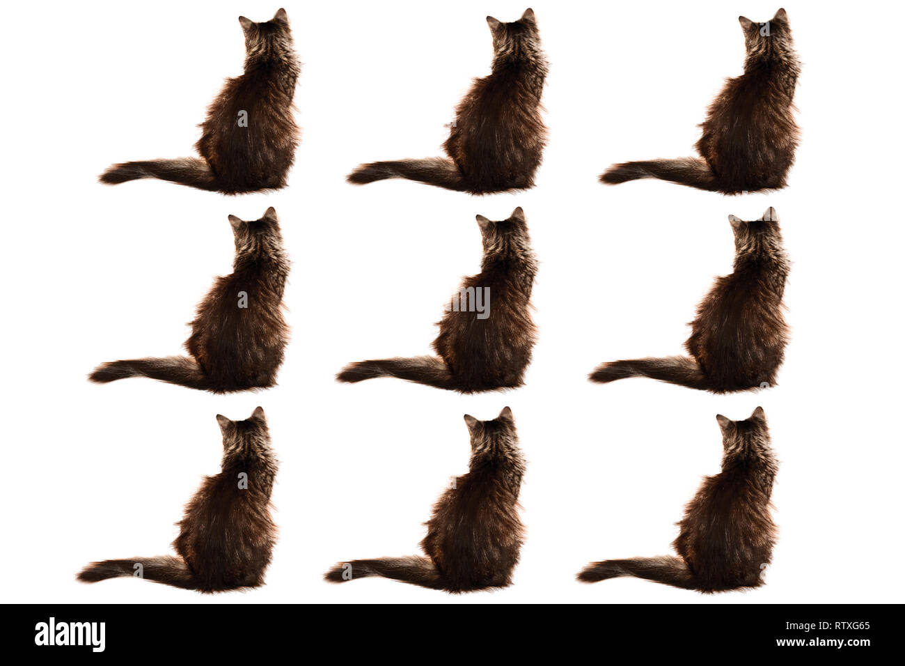nine sitting cats isolated, concept for the nine lives of cats - Stock Image