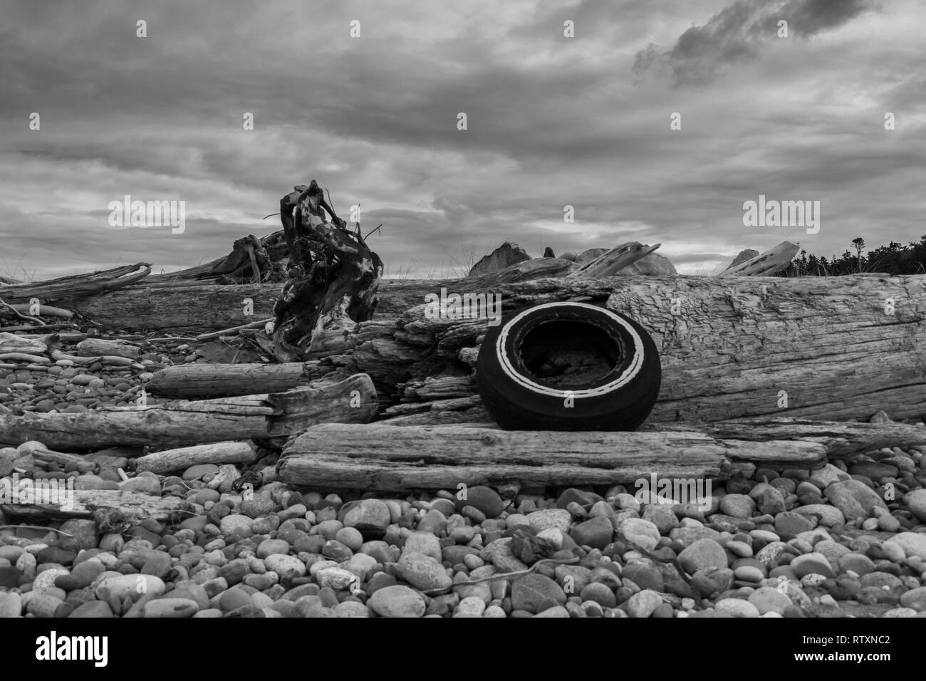 An Old Tire Lies Among Driftwood on West Beach, Whidbey Island Washington - Stock Image