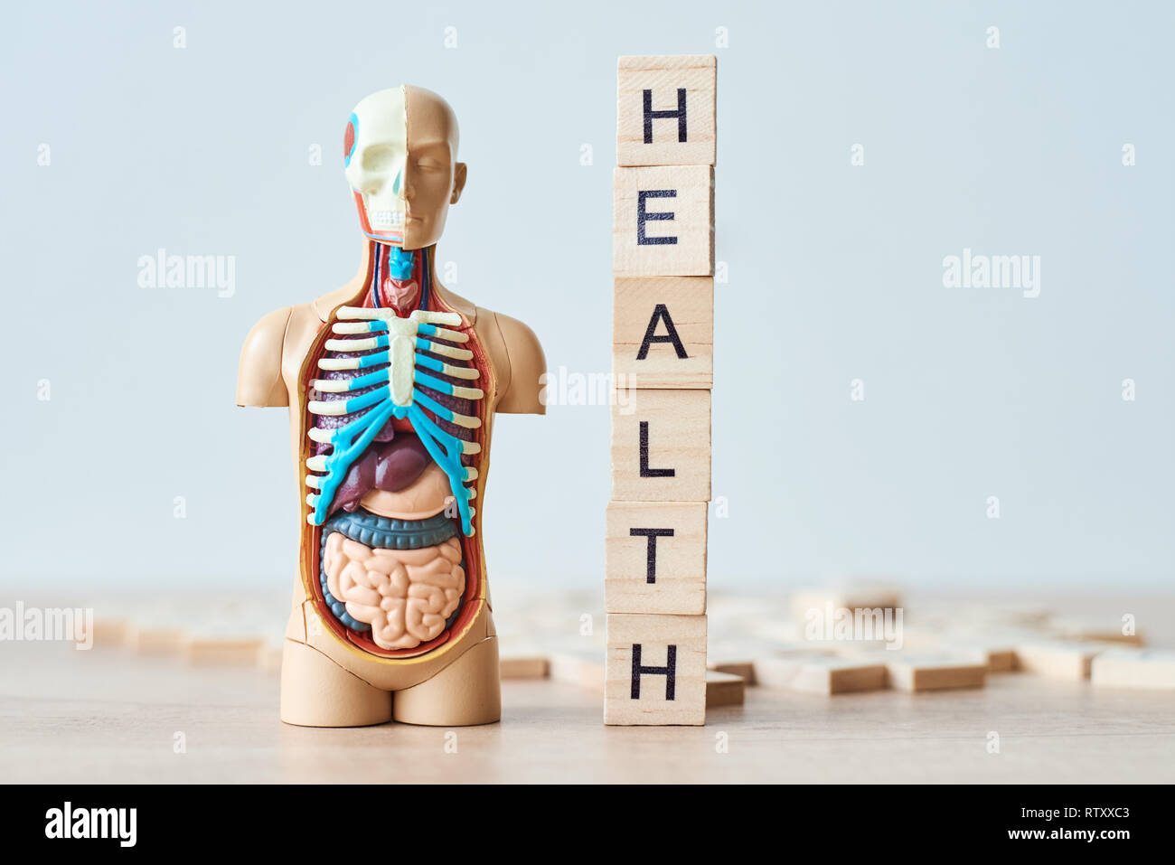 Human internal organs dummy and word health made of wooden blocks on white background with copy space - Stock Image
