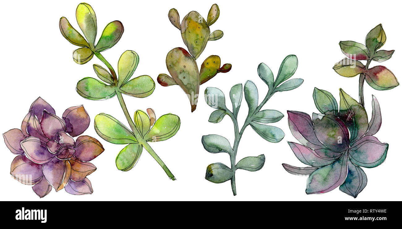 Jungle Botanical Succulent Flower Wild Spring Leaf Isolated Watercolor Background Illustration Set Watercolour Drawing Fashion Aquarelle Isolated Stock Photo Alamy