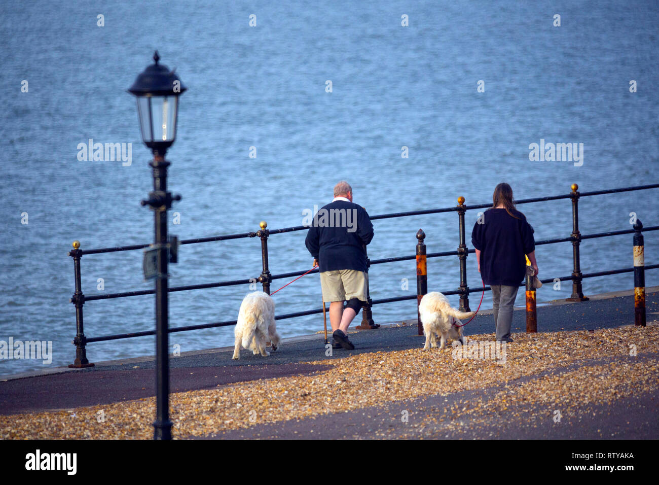 dog,walkers, labradors, two,seafront,lamp, sea,side, sea,lead, leish, - Stock Image