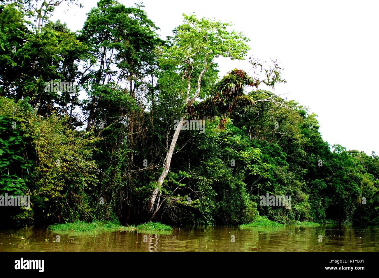 The Amazon rain forest is essentiel for human life on planet earth - Stock Image