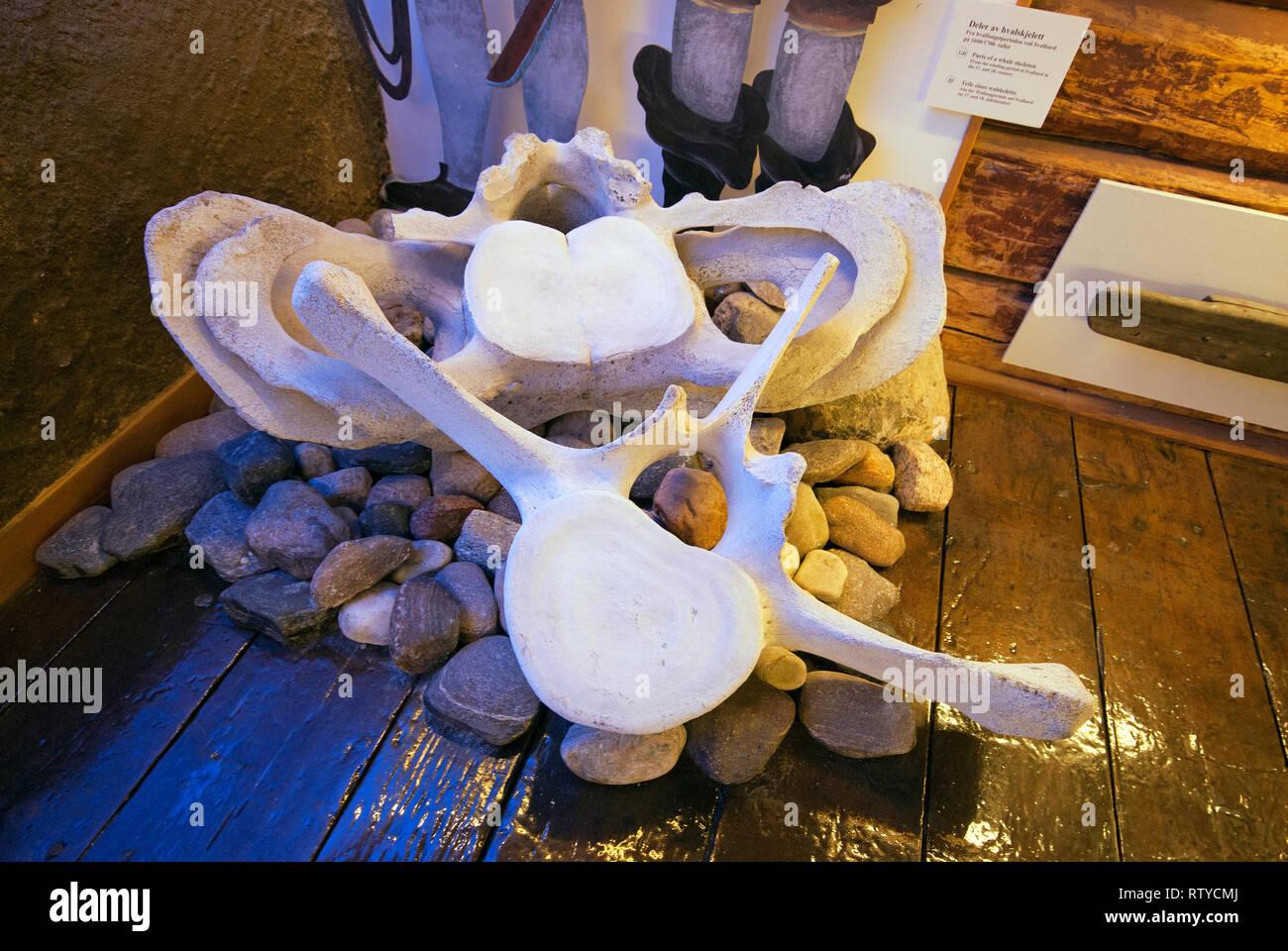 Whale's vertebras at Polar Museum (Polarmuseet) in Tromso, Troms County, Norway - Stock Image