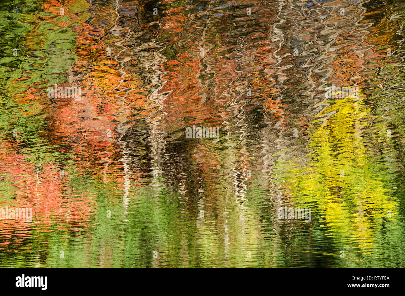 Abstract photograph of coloured trees reflected in rippled water Peterborough Ontario Canada - Stock Image