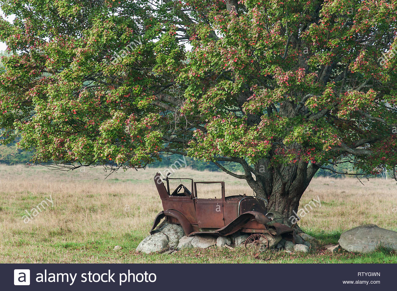 Abandoned car rusting away under large Maple tree Maynooth Ontario Canada - Stock Image