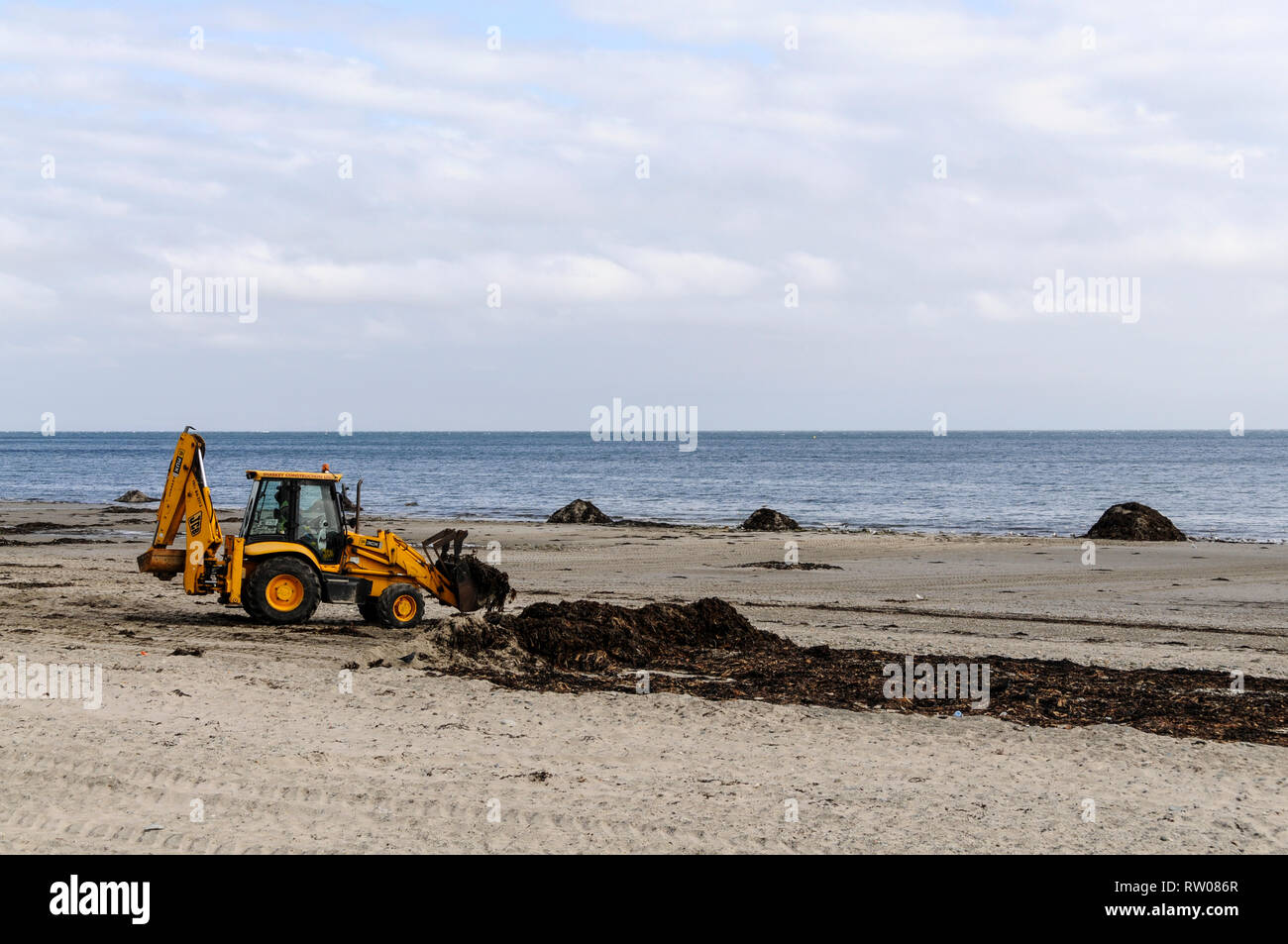 A tractor shoring up seaweed is taken to the sea shore on the  beach in Douglas, the island's capital on the Isle of Man, Britain. The seaweed is then - Stock Image