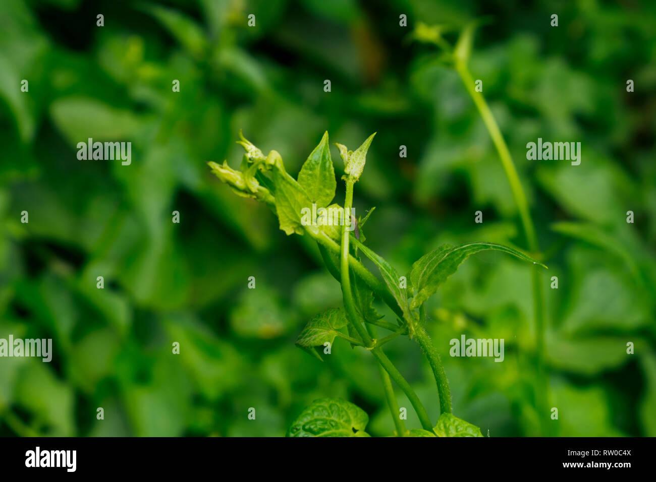Mosquito on the wild flower Stock Photo