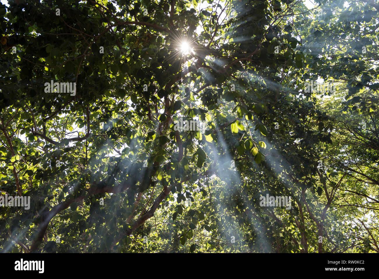 Piaraçu village (Aldeia Piaraçu), Mato Grosso State, Brazil. A sunburst through the trees of the forest. Stock Photo