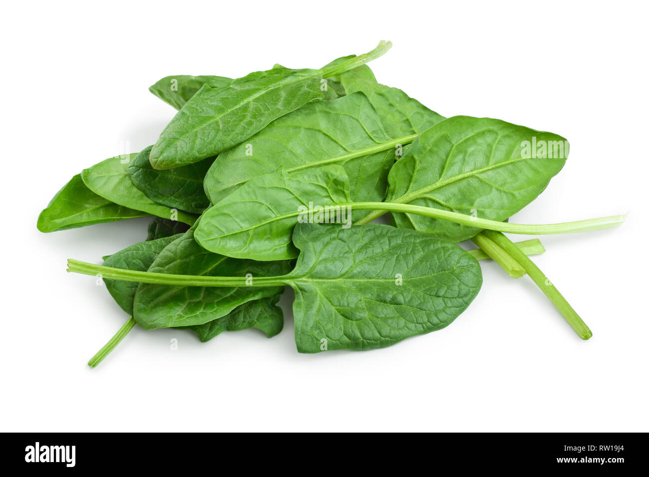 Spinach Plant Cut Out Stock Images & Pictures - Alamy