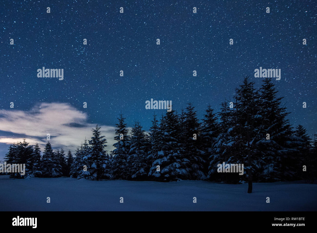 starry dark sky and spruces in carpathian mountains at night in winter - Stock Image