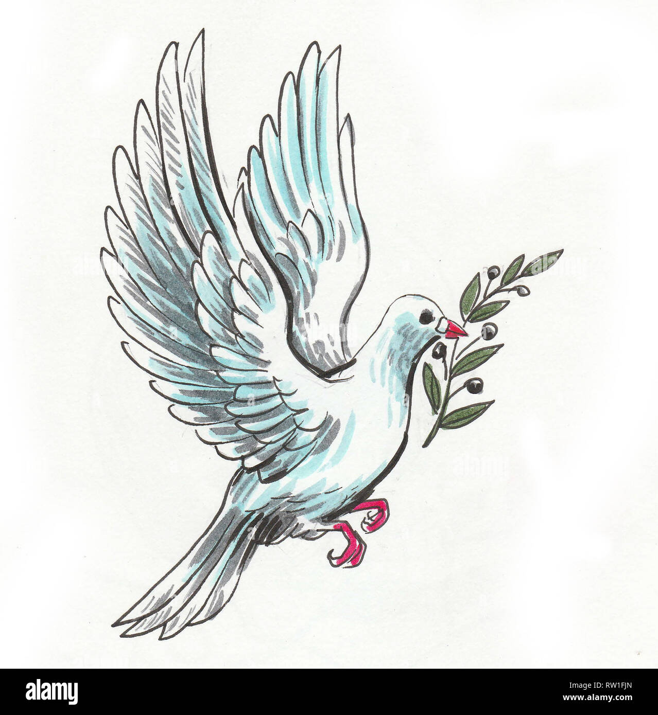 Flying Dove Of Peace With Olive Branch Ink And Watercolor Illustration Stock Photo Alamy