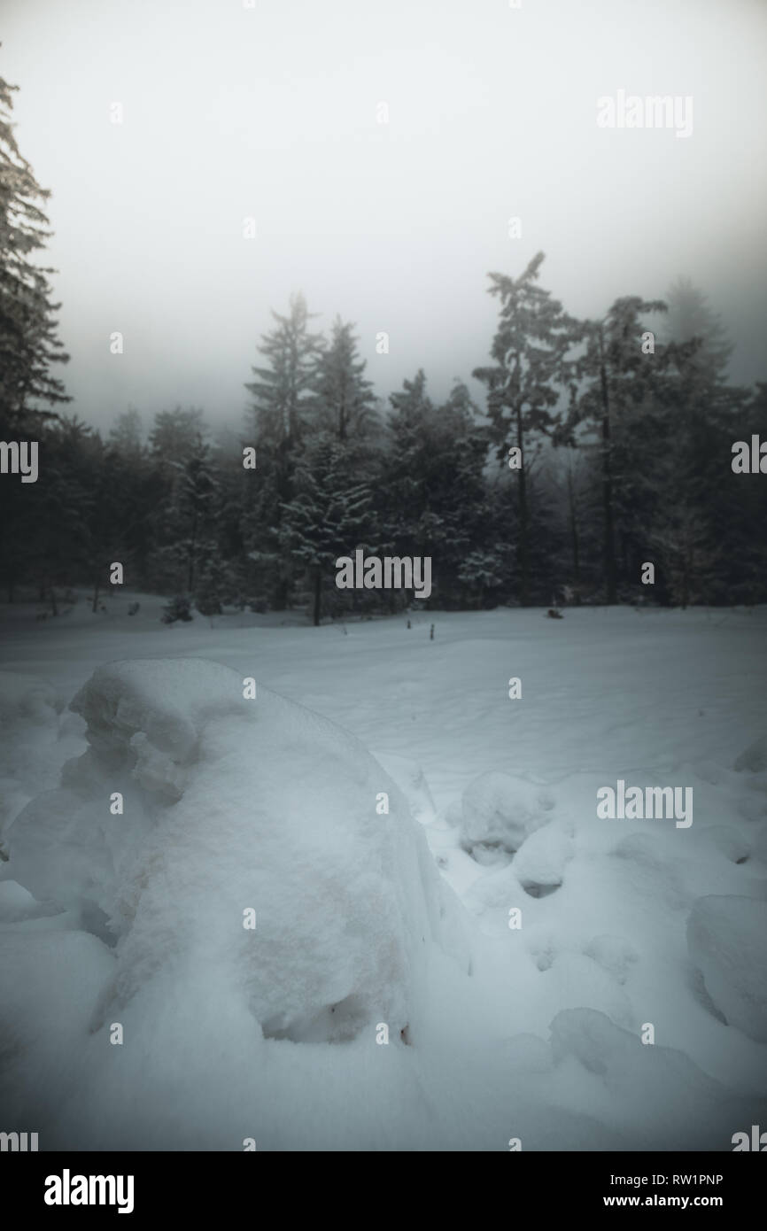 Magical white spruces on a frosty day in Forest. Location Hohe Wand Austria Europe. Exotic wintry scene. Blue toning. - Stock Image