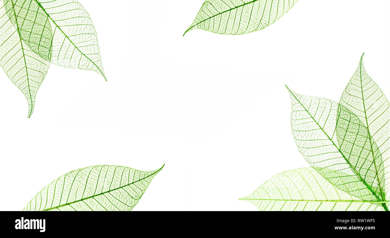 Transparent leaves composition  isolated on white background - Stock Image