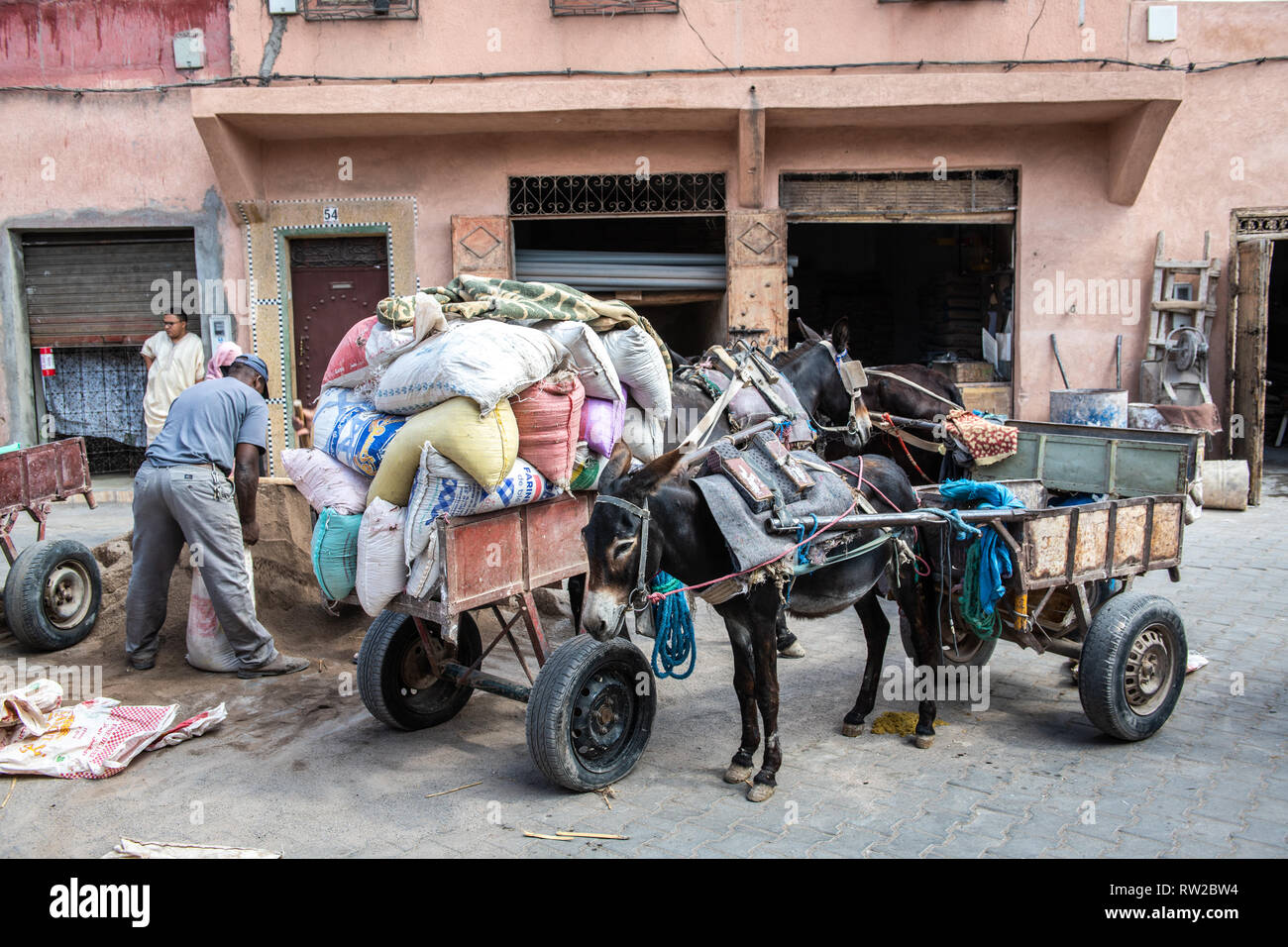 Man loads up back of donkey carts with full burlap bags in medina quarter of Marrekech, Morocco - Stock Image