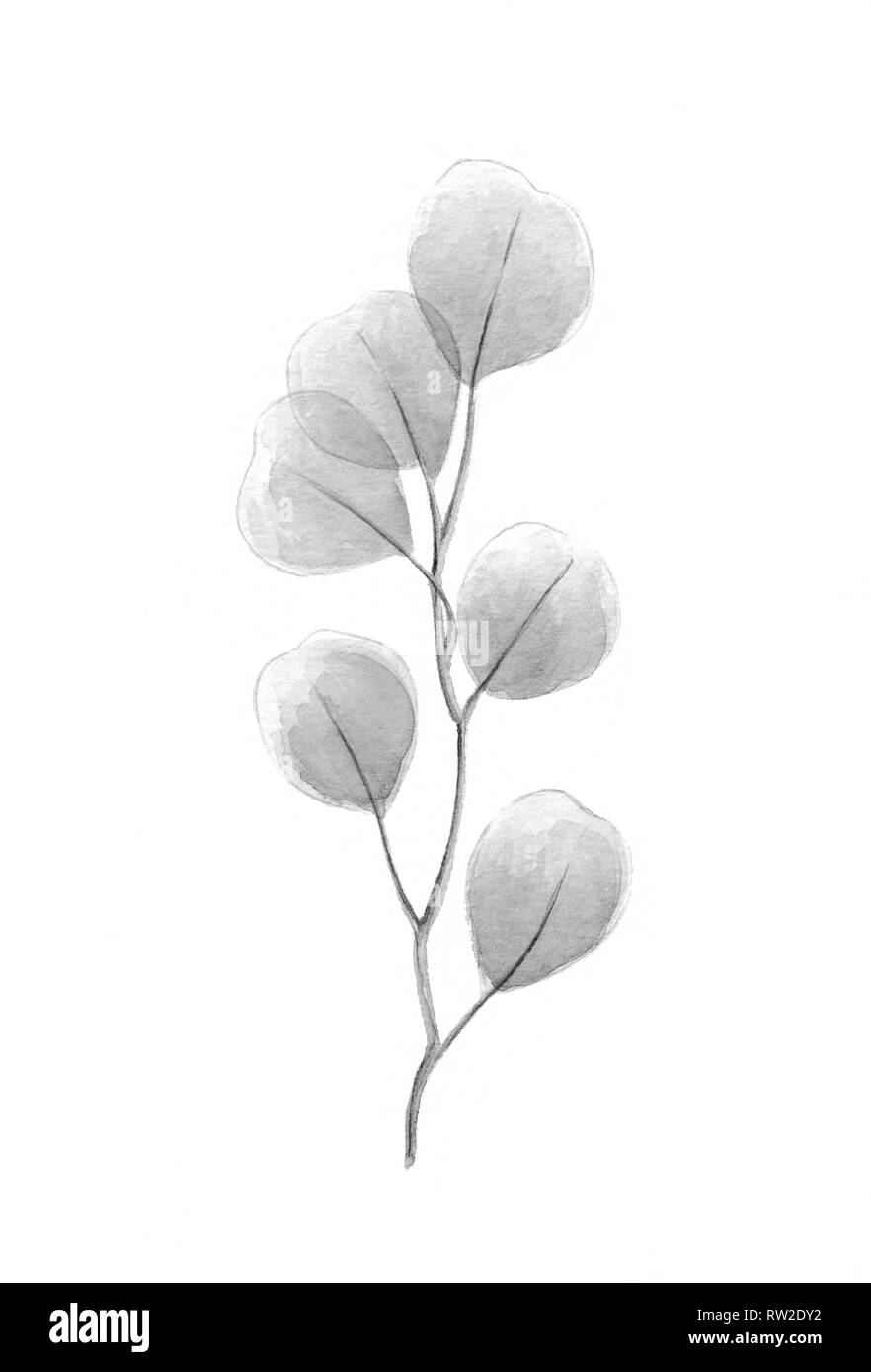 Silver dollar eucalyptus grayscale watercolor illustration with gray eucalyptus tree twig branch with round leaves heart shaped plant wedding decorati Stock Photo