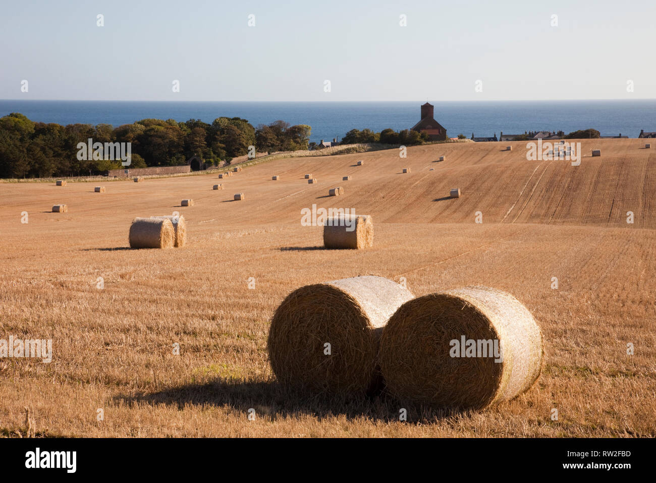 View across golden field of round straw bales to village church on east coast. St Abbs, Berwickshire, Scottish Borders, Scotland, UK, Britain Stock Photo