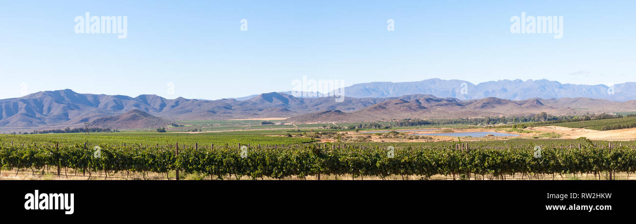 Robertson Wine Valley, Route 62, Breede River Valley, Western Cape Winelands, Langeberg Mountains, South Afrcia, Panorama of vineyards and mountains - Stock Image