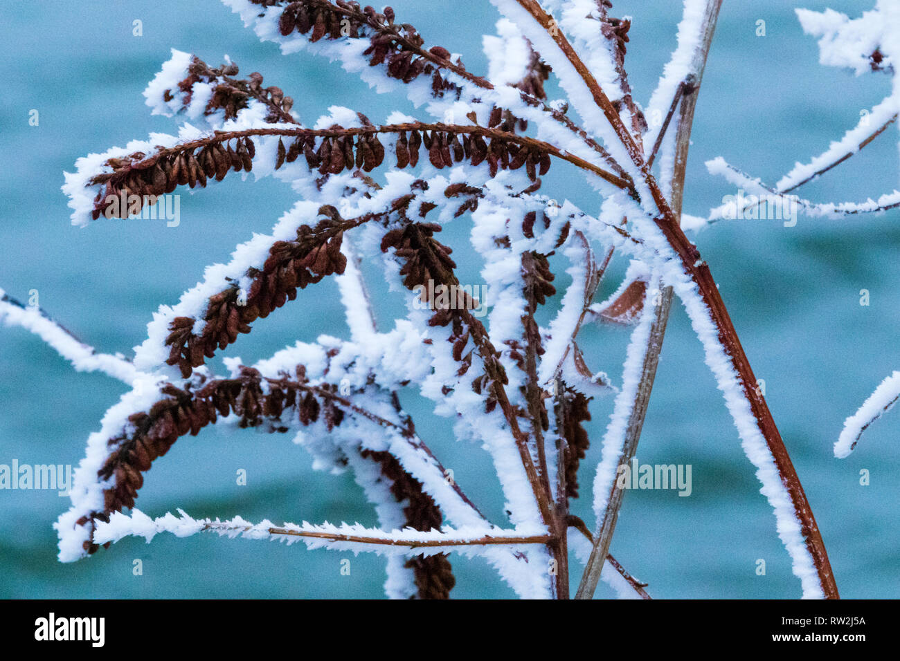 on a bitter cold day in Kansas, the vegetation is covered in a thick frost. Scott City, Kansas 2019 - Stock Image