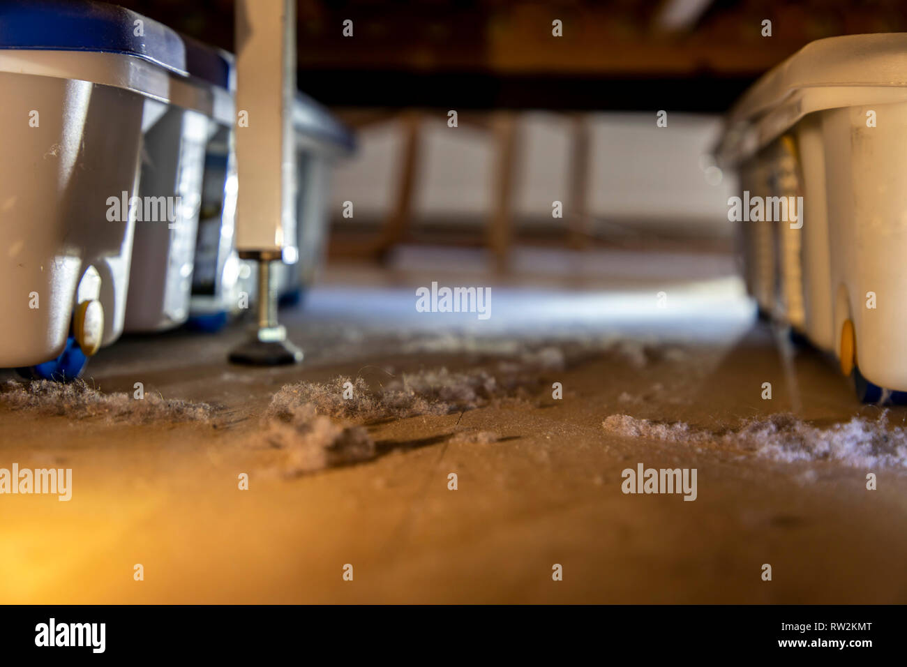 Hausstaub, Wollmäuse, Staubknäule, sammeln sich unter einem Bett, Stock Photo