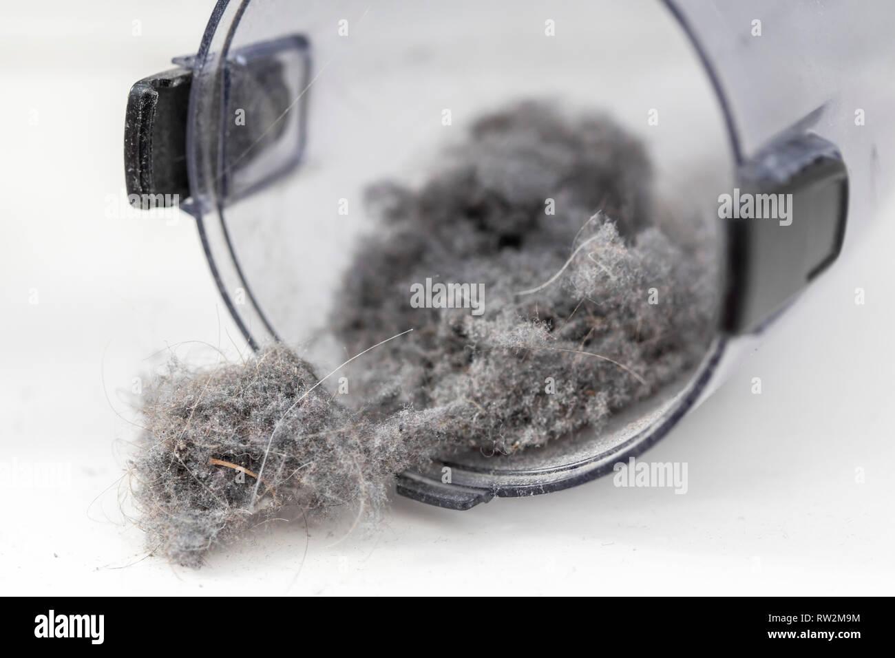 Hausstaub, Wollmäuse, Staubknäule, im Sammelbehälter eines Staubsaugers, Stock Photo