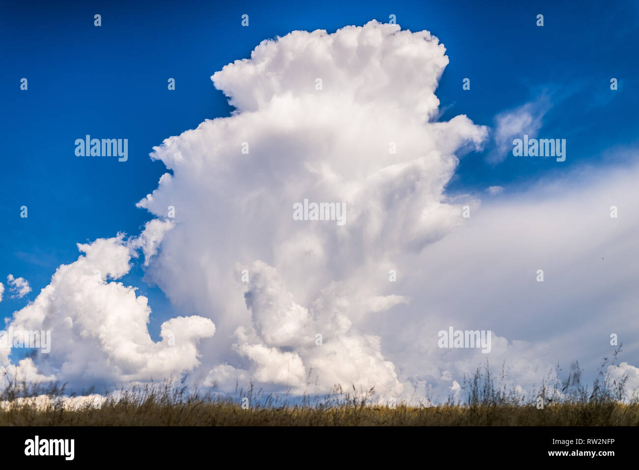 Cumulonimbus towering and beginning to anvil with a small thunderstorm in northern California on a Spring afternoon. - Stock Image