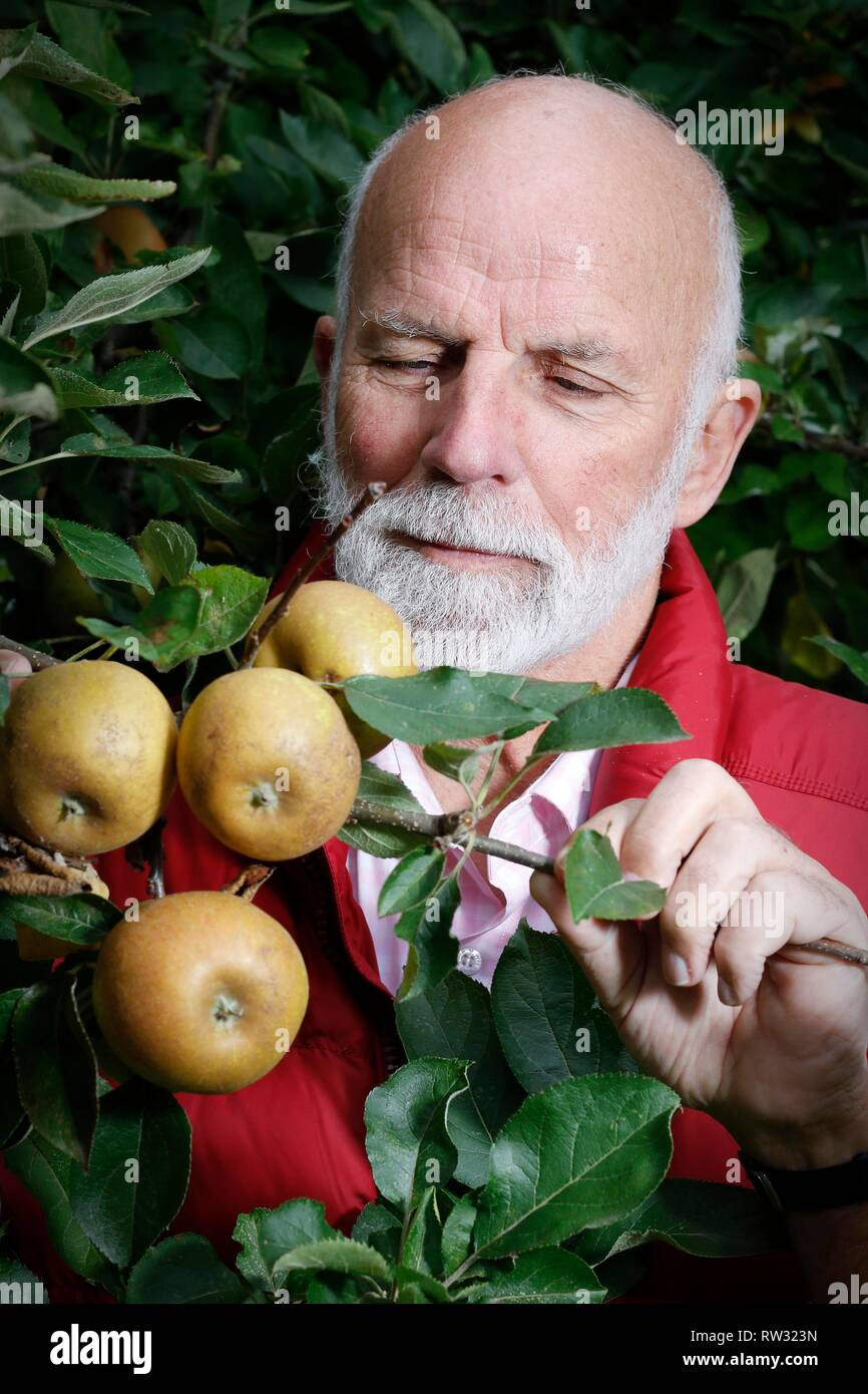 Charles Martell, the renown Gloucestershire apple expert, cheesemaker, distiller, and High Sheriff of Gloucestershire, with some Ashmead's Kernal appl - Stock Image