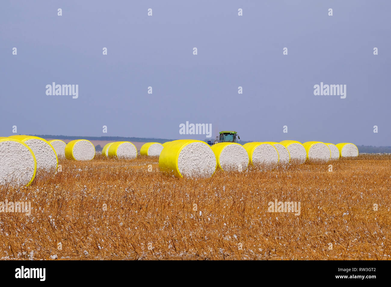 Round bales of freshly harvested cotton wrapped in yellow plastic, in the field in Campo Verde, Mato Grosso, Brazil - Stock Image