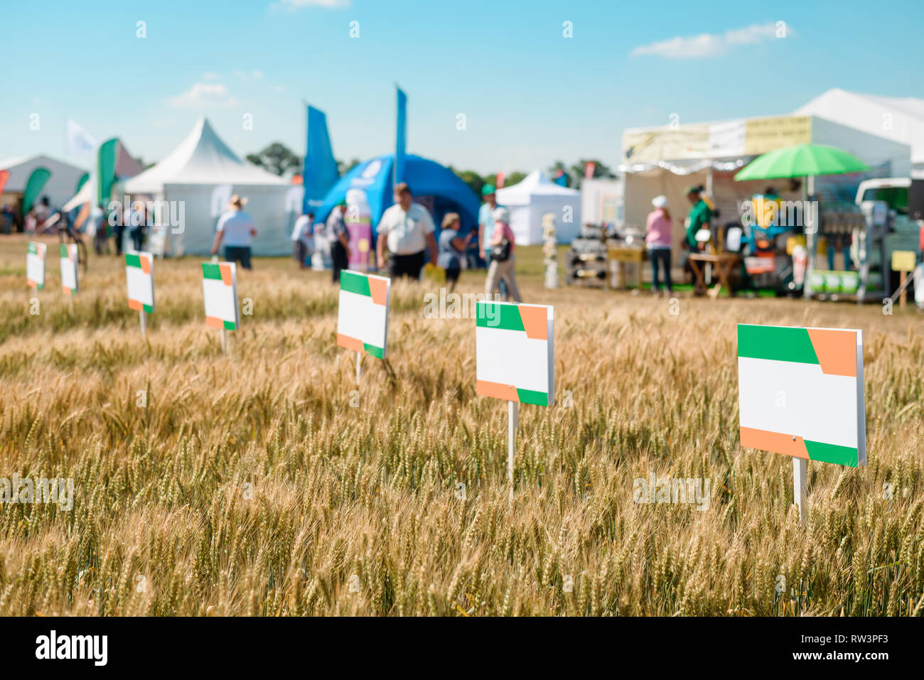 Wheat field with sort nameplates - Stock Image