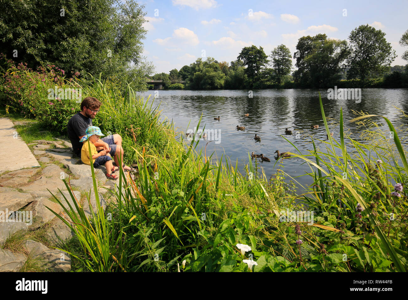 Essen, North Rhine-Westphalia, Ruhr area, Germany, Ruhr promenade in the Steele district, father and son sit on the banks of the Ruhr and feed ducks,  - Stock Image