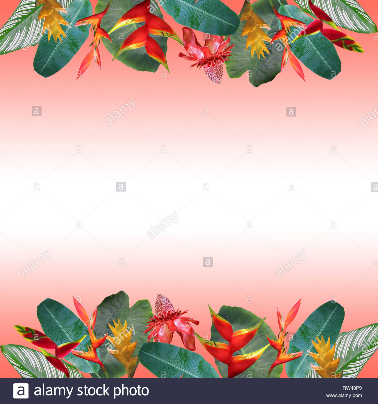 Photo collage of tropical flowers and leaves on gradient coral background - Stock Image