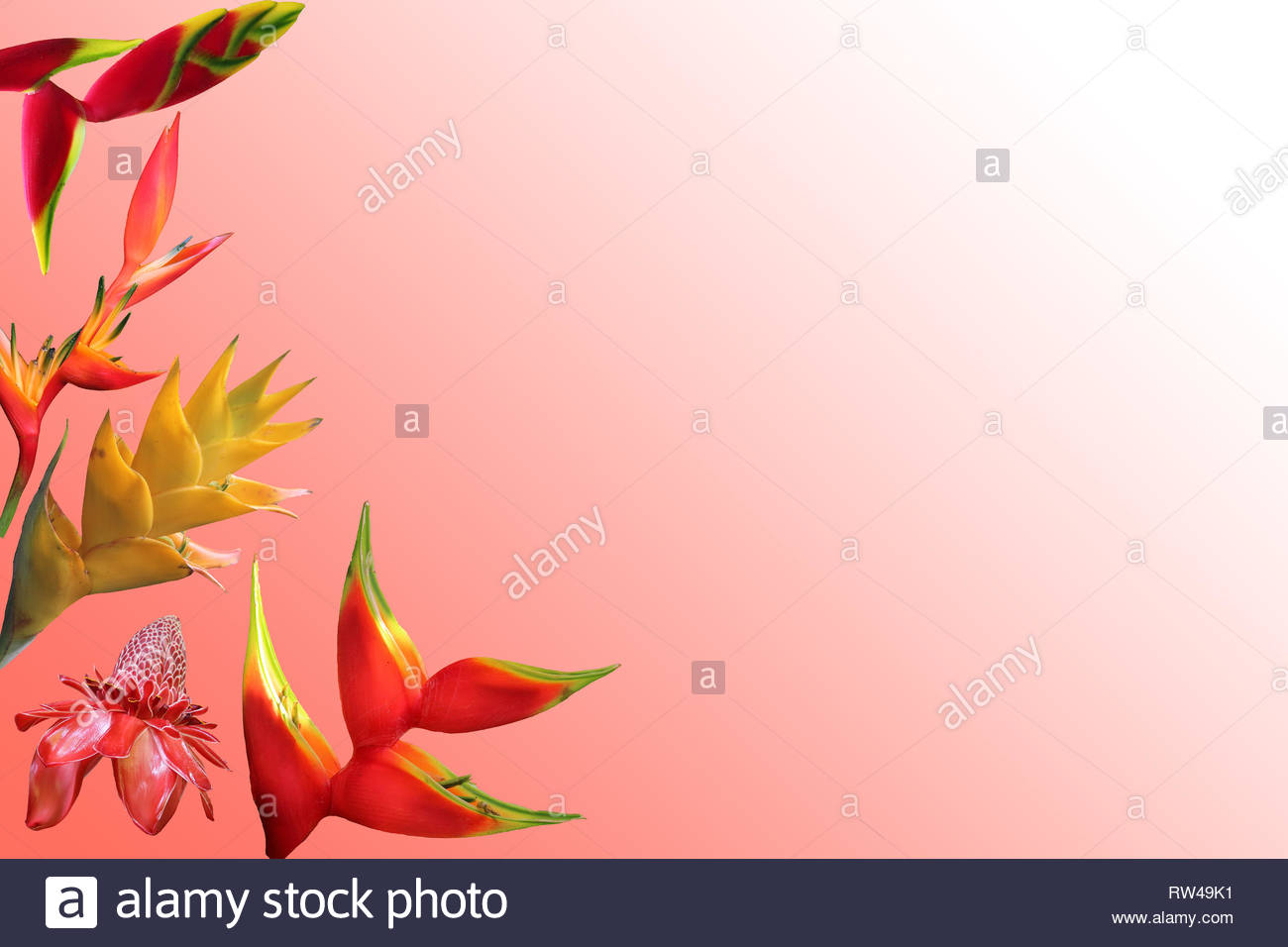 Photo composition of isolated exotic flowers on coral gradient background - Stock Image