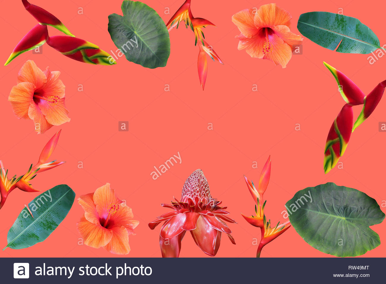 Photo collage of isolated tropical flowers and leaves on coral  background Stock Photo