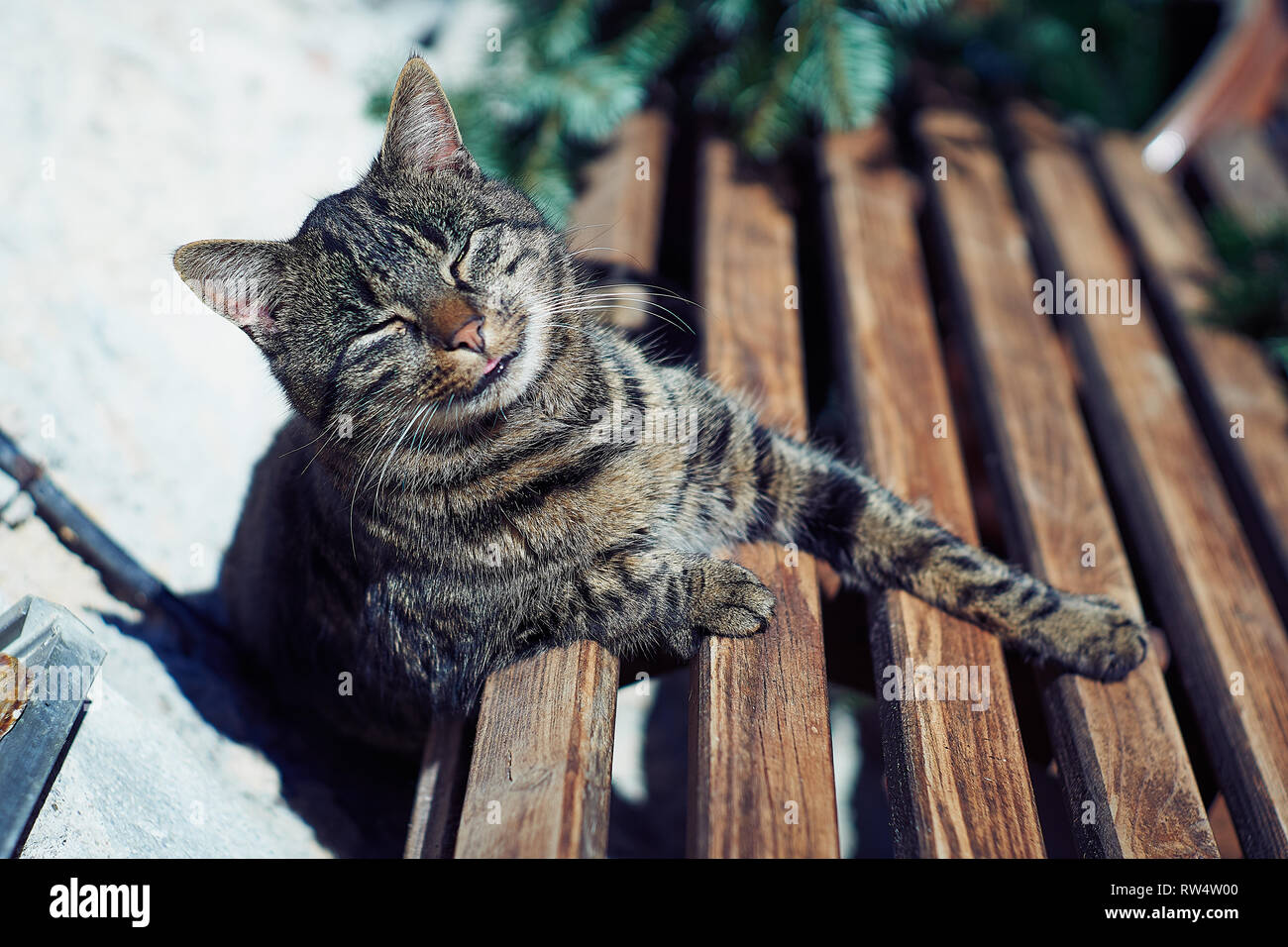A gray cat sits on a wooden bench near the house.Cute gray cat sitting on a wooden bench outdoors Stock Photo