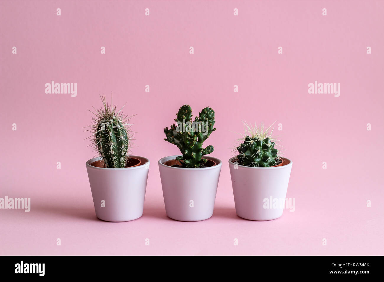 Three tiny cacti in pink pots on a pink background Stock Photo