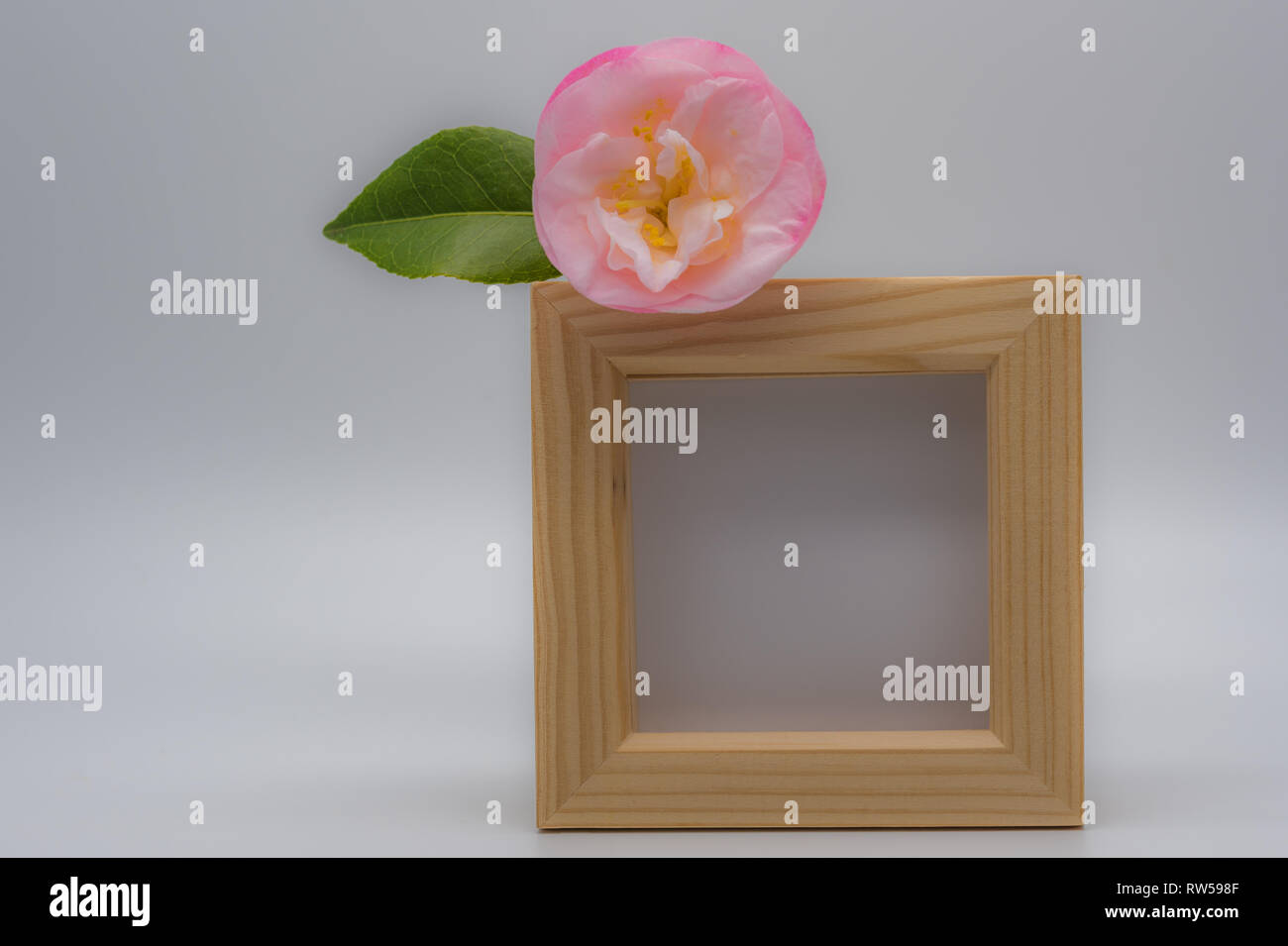 Square wooden frame mockup with a single pink flower with a green leaf placed upon top corner of photo frame. - Stock Image