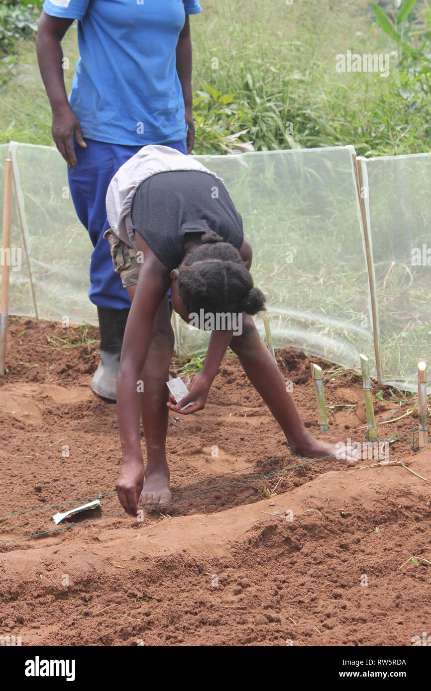 Gardening in Zambia, sowing seeds - Stock Image
