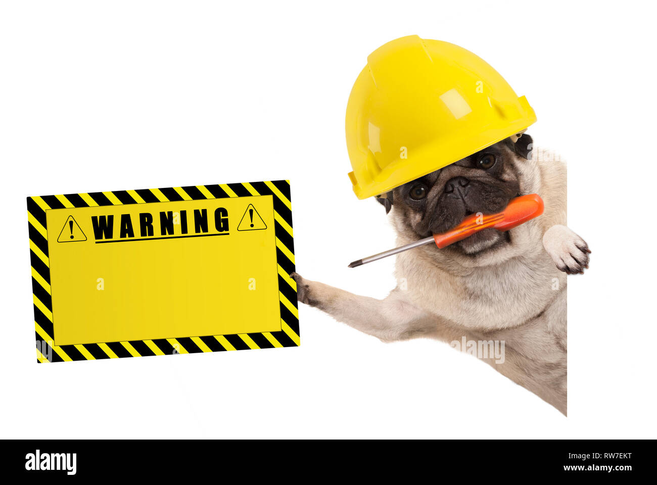 frolic construction worker pug dog with constructor helmet, holding orange screwdriver and yellow warning sign board, isolated on white background Stock Photo