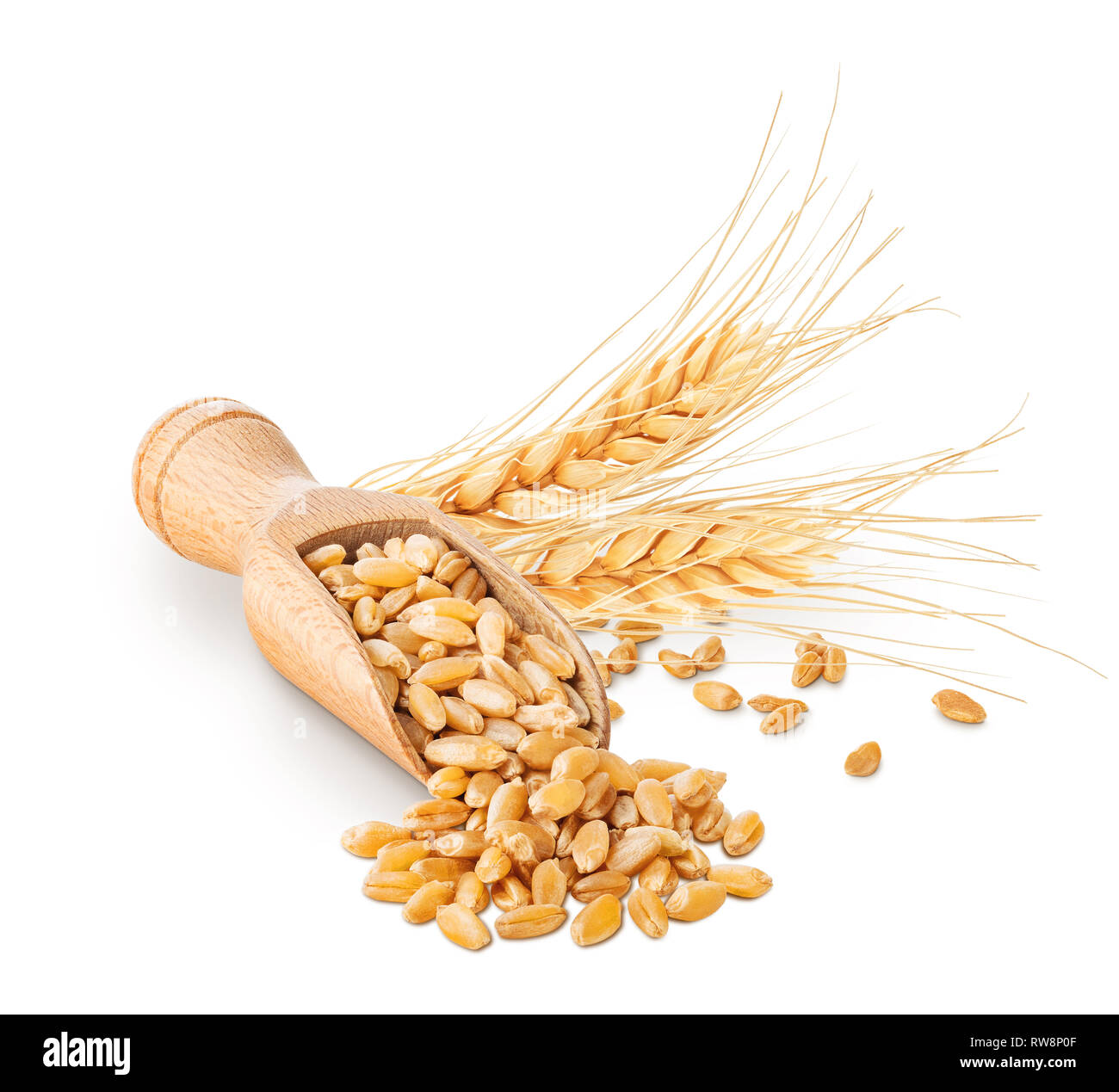 Wheat grains and ears isolated on white Stock Photo