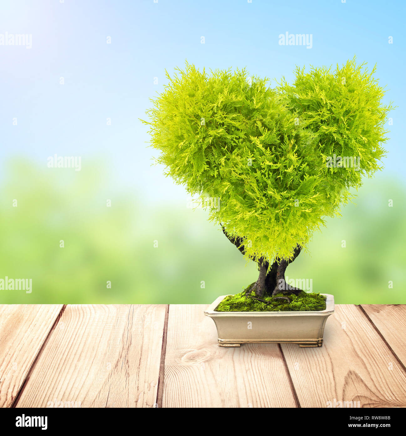 Eco Concept Heart Shaped Tree In Flower Pot On Old Wooden Deck On