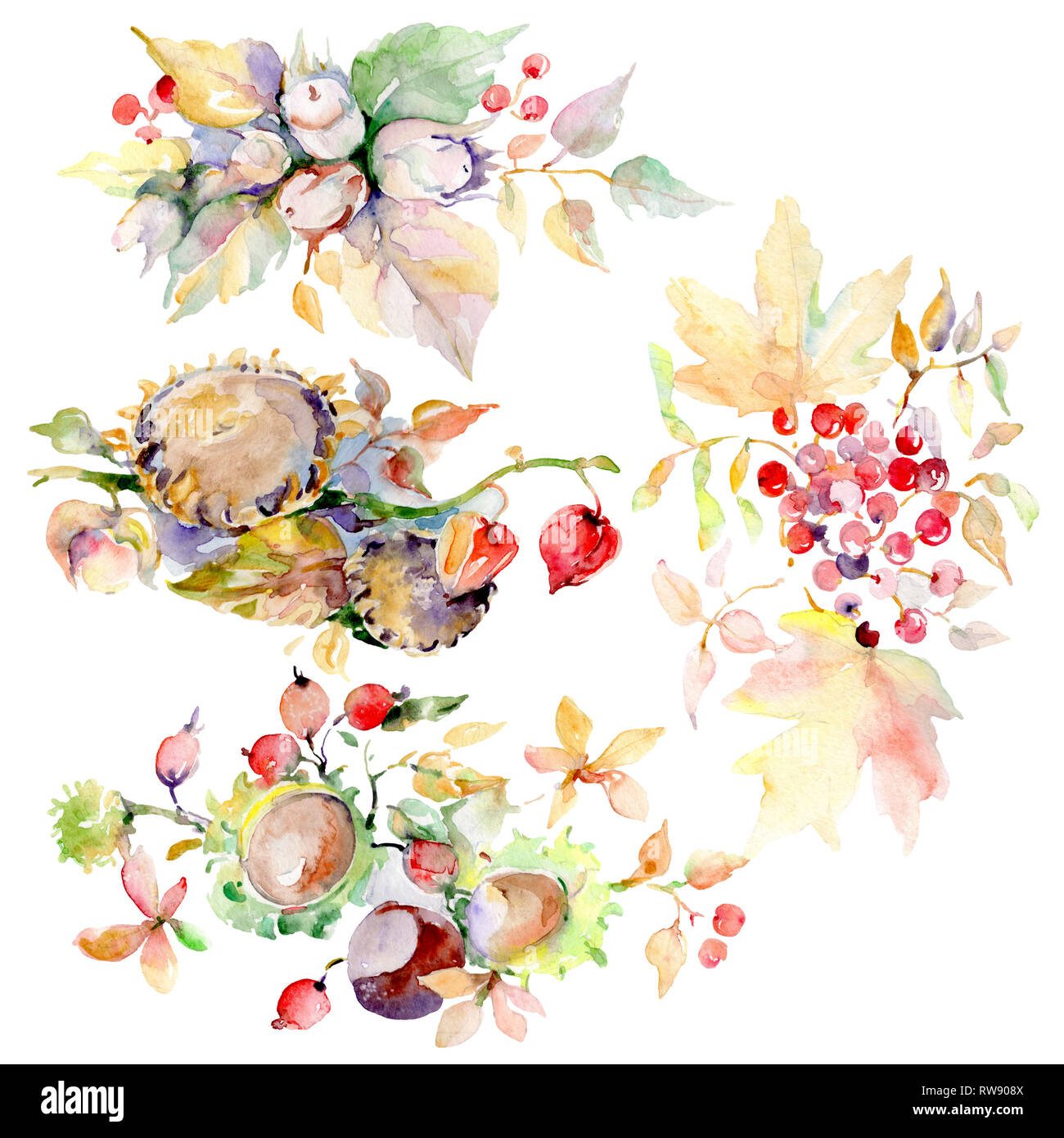 Bouquet Of Autumn Forest Fruits Wild Spring Leaf Isolated Watercolor Background Illustration Set Watercolour Drawing Fashion Aquarelle Isolated Bo Stock Photo Alamy