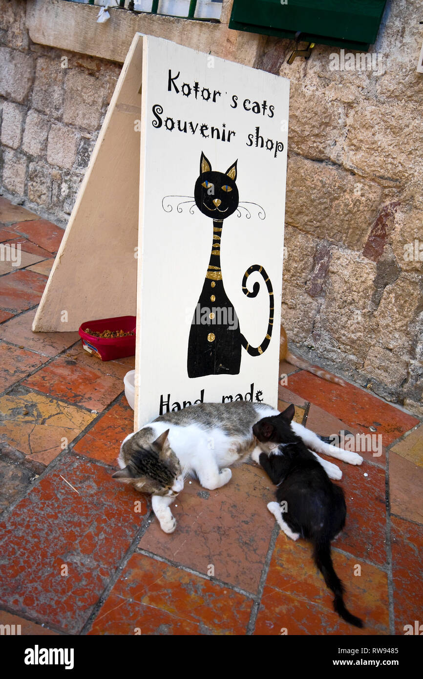 cat sign, outside souvenir shop; 2 cats lying; city symbol; animal, felines, food dishes, Kotor; Montenegro; Europe; summer, vertical - Stock Image