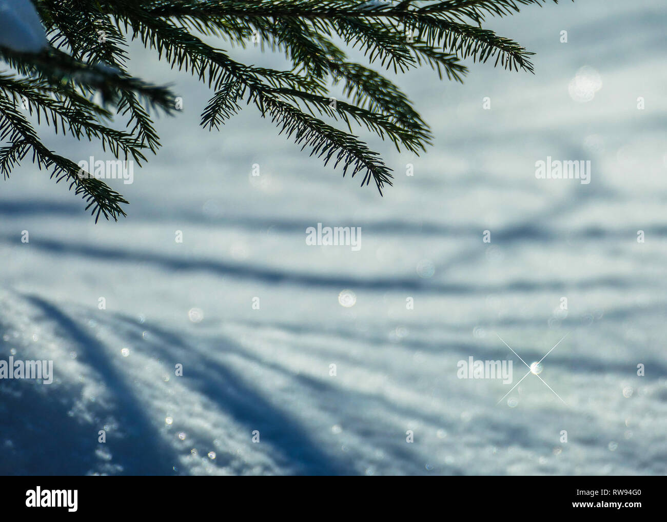 March snow glitters Stock Photo