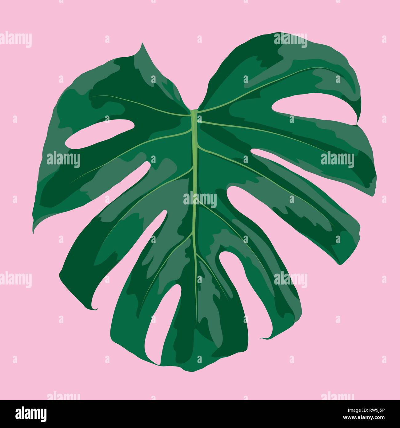 Tropical Leaf Of Monstera Deliciosa Isolated On Pink Background Vector Illustration Stock Vector Image Art Alamy
