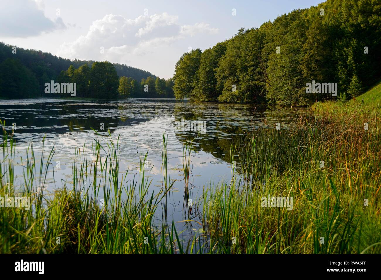 Lake near Rutka, Suwalki Landscape Park, Podlaskie, Poland Stock Photo