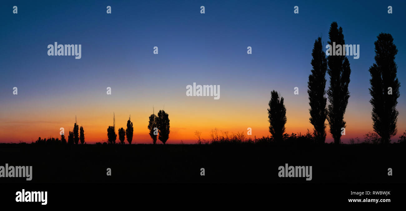 Tree Alley Silhouettes. An evening summer sunset landscape on sky background in Dnipropetrovsk, Ukraine - Stock Image