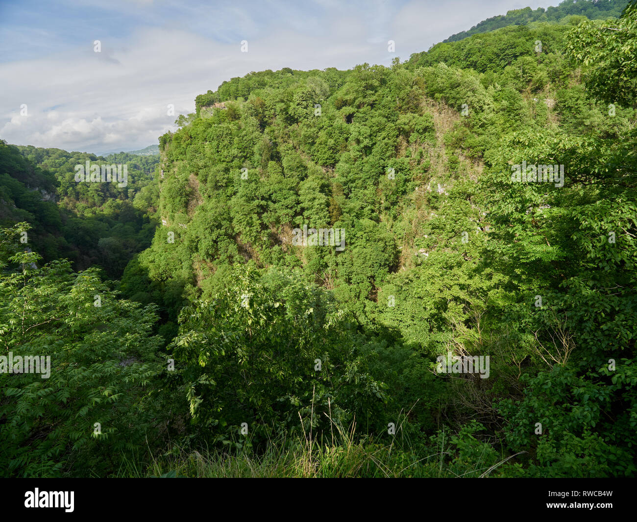 Gorge with a river down between the mountains covered with green forest. Yew and boxwood grove, Sochi, Russia. Stock Photo