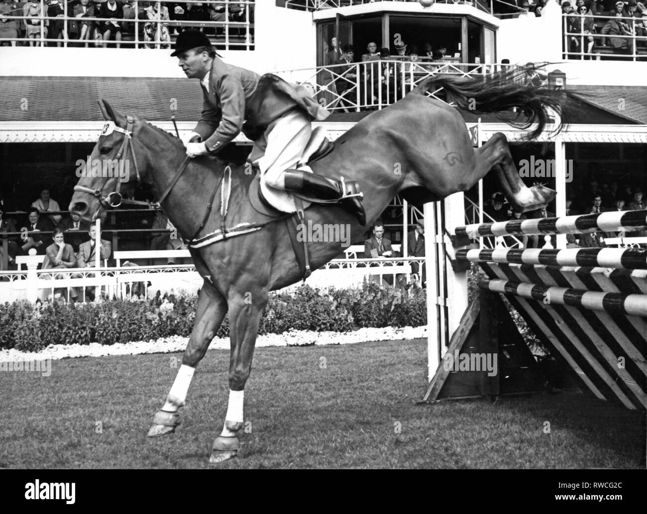 Buchwaldt, Magnus von, 4.5.1910 - 23.3.1987, German athlete (equestrian), half-length, on 'Jaspis', at show jumping, international riding event, Dublin, 3.8.1954, Additional-Rights-Clearance-Info-Not-Available - Stock Image