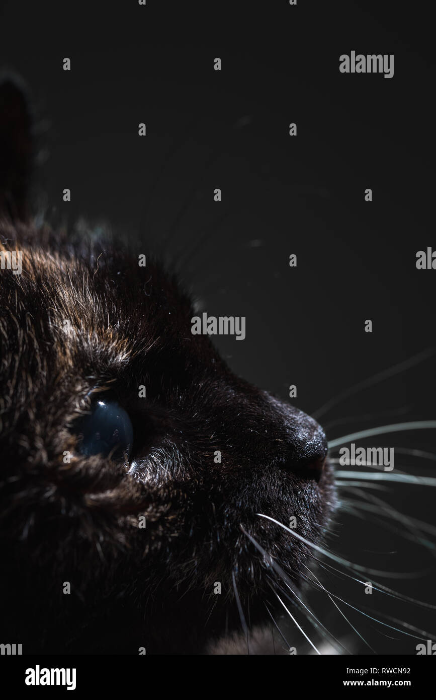 Cat eye close up - Stock Image